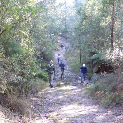 Ashbrook Fire Trail Tidbinbilla, 21 June 2018