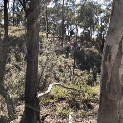 Bushland Nature Walk at the Australian National Botanic Gardens 3 March 2019 IMG 2862