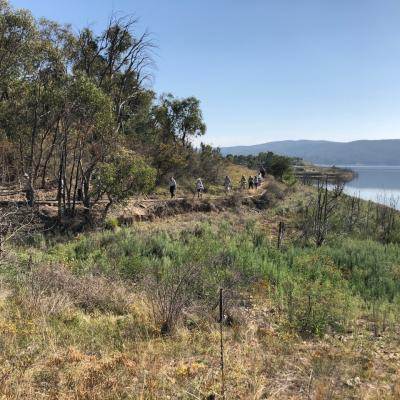 Googong Foreshore 27 February 2019 Singleton IMG 2846