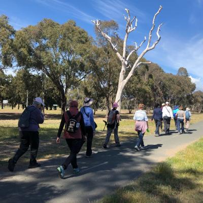 Kambah 13 October 2019 Singleton IMG 6623