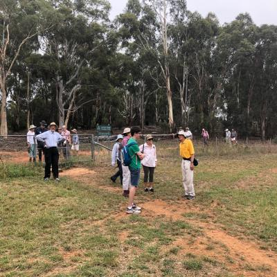 North Lyneham Ridge 20 January 2019 Singleton IMG 2241