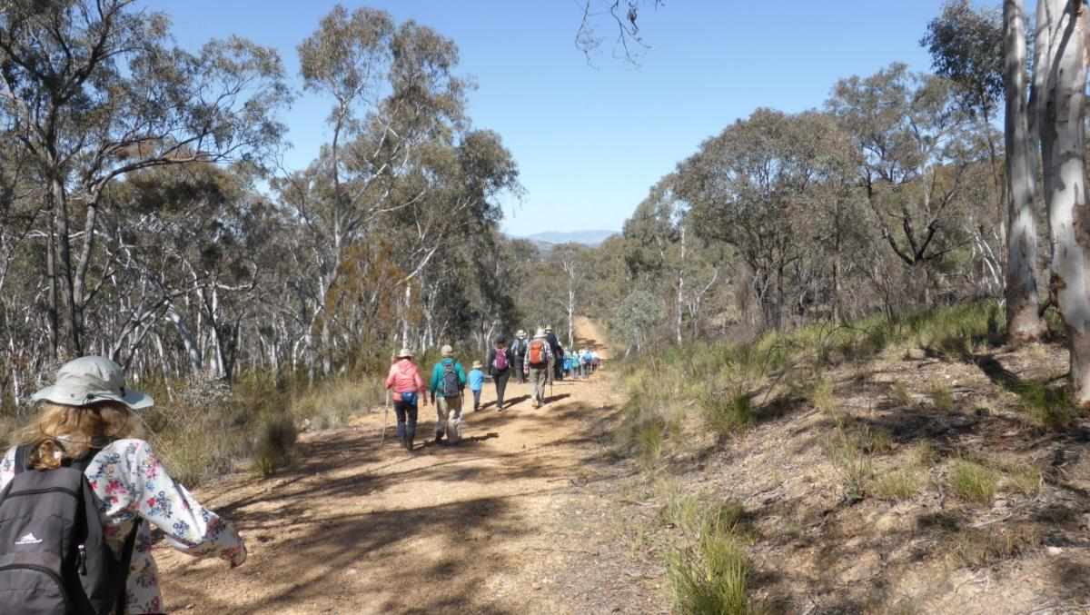 Aranda Bushland 19 September 2018 Welsh